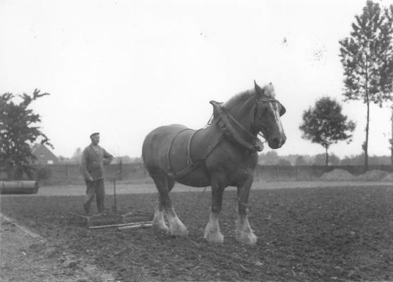 landbouwer albert d'haeger